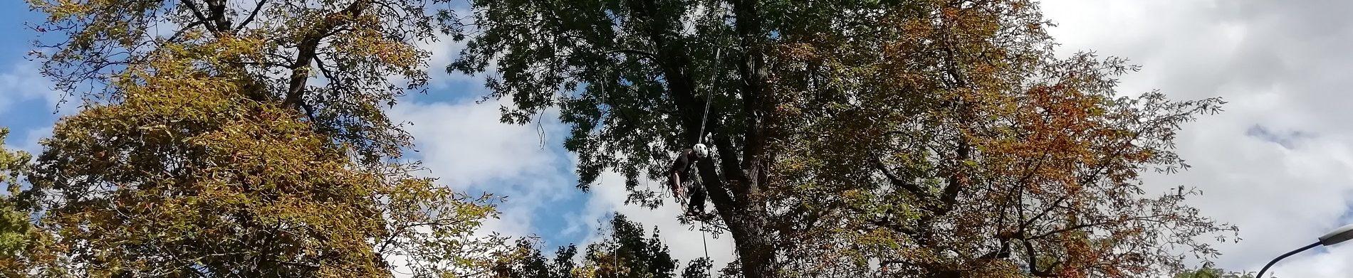 Un pont pour les Ecureuils du Grand Nancy