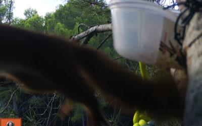 écureuil au piège photo